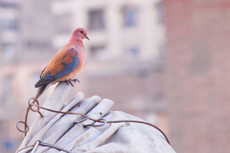 Depth Of Field Colourful Beautiful Nature Birds Taking Photos Lovely Bird Bird Photography EyeEm Birds