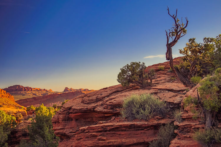 Arches National Park Arid Climate Blue Clear Sky Copy Space Delicate Arch Hike Evening Light Hiking Trail Landscape National Park Nature Non-urban Scene Red Sandstone Rock Formation Scenics Sunlight The Great Outdoors - 2016 EyeEm Awards Travel Destinations Tree Utah