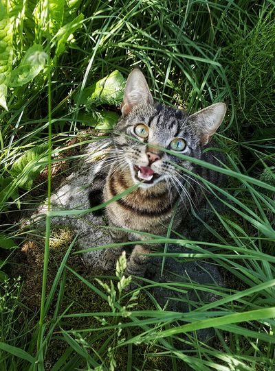 Samsung My Little Angel I Love Cats Domestic Cat Feline