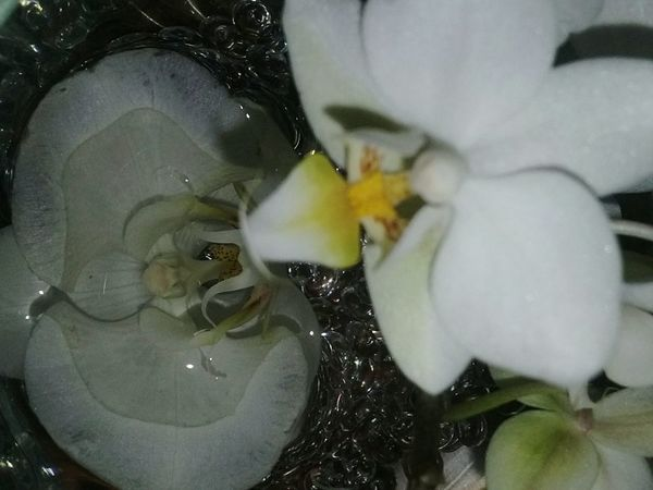Reflections In The Water Showcase April Beauty In Nature Orchids Orchideas Fleurs Withe Flower Power In Nature