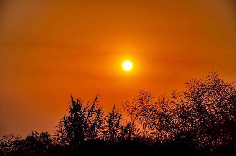Sunset Nature Tree Beauty In Nature Scenics Sun Tranquil Scene