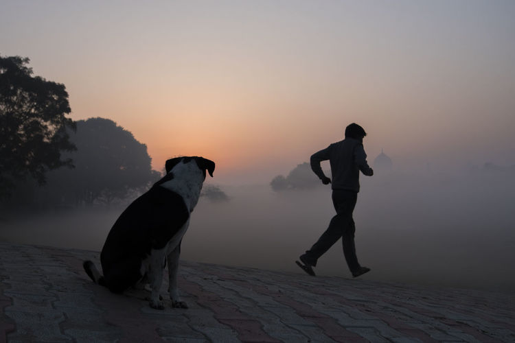 Silhouette of dog on foggy weather