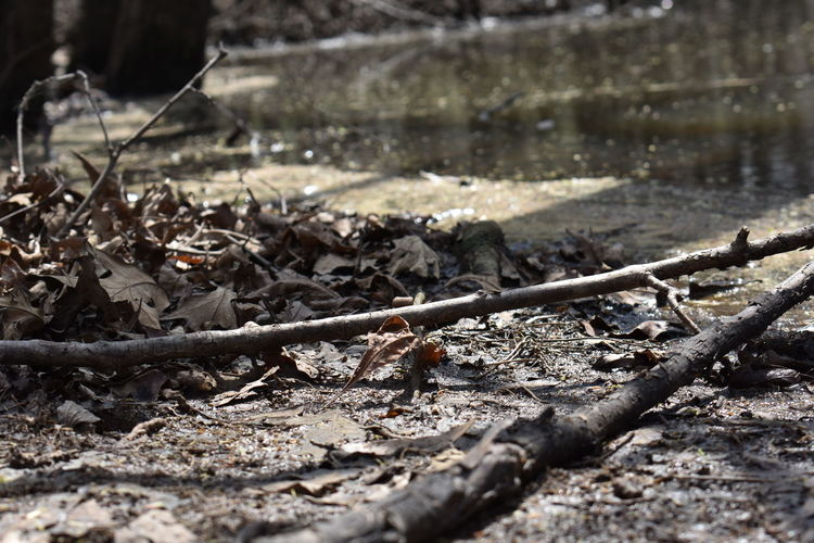 Bell Slough in the spring Water Tree Trees Sticks And Twigs Sticks Park Shadow Sunlight Close-up