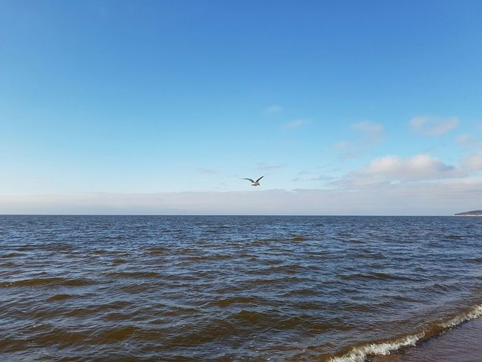 Flying Bird Animal Themes Animals In The Wild One Animal Animal Wildlife Nature Outdoors Beach Day No People Airplane Beauty In Nature Insect Sky Water Seagull Lithuania Klaipeda Baltic Sea