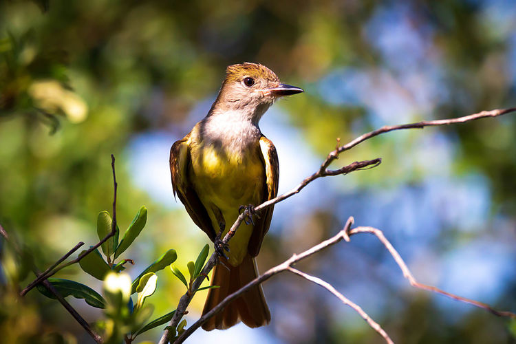 Bird Animal Themes Vertebrate Animal Animal Wildlife One Animal Perching Animals In The Wild Plant Tree Branch Focus On Foreground No People Nature Day Close-up Beauty In Nature Plant Part Outdoors Selective Focus