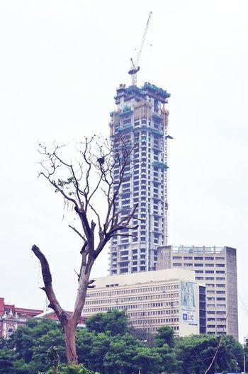 Urbanization Deforestation Effect NikonD5100