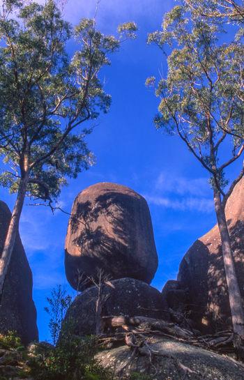 Jun 2004 - An Aboriginal site near Main Range National Park, Queensland, Australia Aboriginal Land Low Angle View Morning Light Trees Day Granite Mountain Granite Boulders No People Trees And Sky