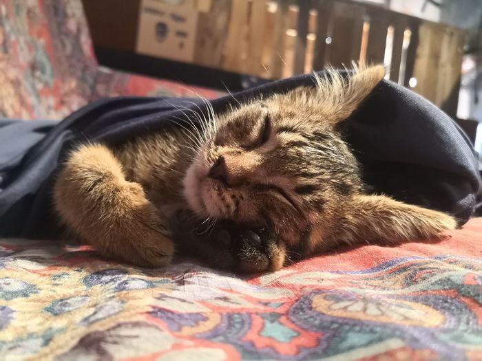 Pets Bed