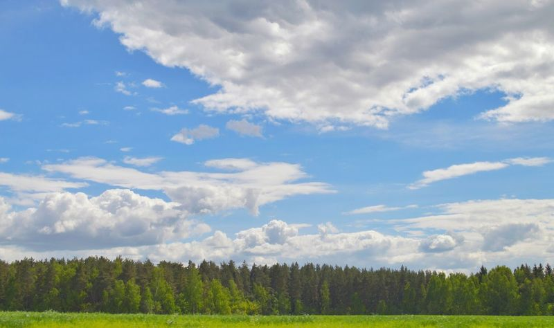 Tree Trees Forest Cloud - Sky Sky Nature Beauty In Nature Grass Blue Blue Sky EyeEm Best Shots EyeEm Nature Lover EyeEmNewHere