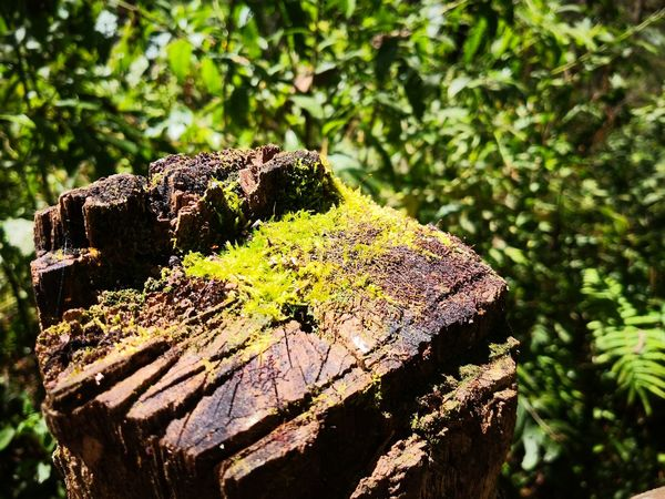 Foto Celular Tree Close-up Plant