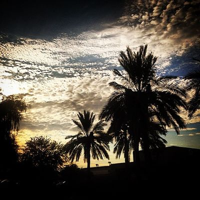 Oregon needs palm trees!