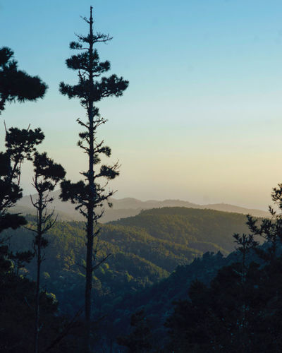 Scenic view of forest against sky during sunset