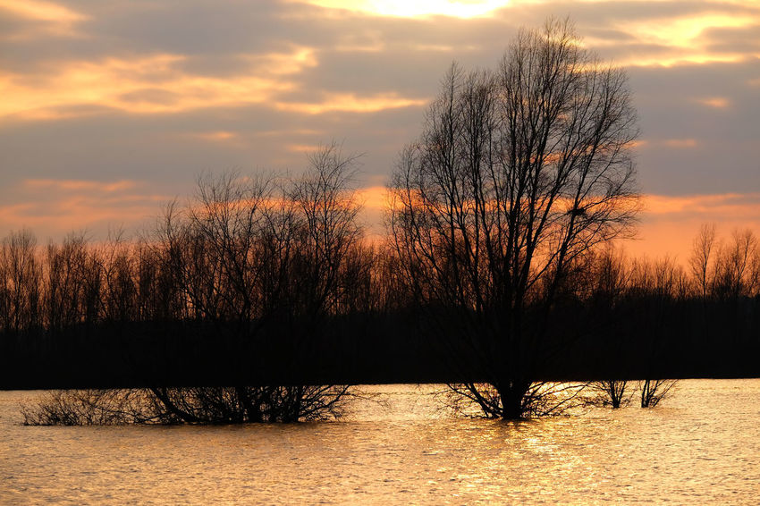 The river IJssel in Deventer, Overijssel, the Netherlands Dutch River Bare Tree Beauty In Nature Cloud - Sky Cold Temperature Day Dutch Landscape High Water Level Landscape Nature No People Outdoors Scenics Silhouette Sky Sunset Tranquil Scene Tranquility Tree Water Winter