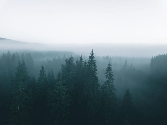 Trees During Foggy Weather Sky