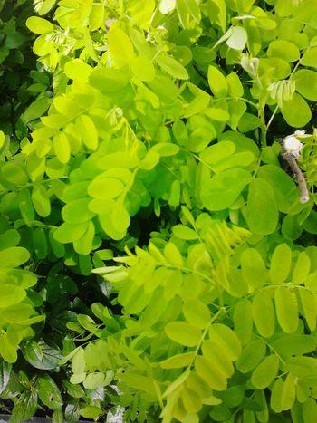 Spring Nature Green Green Green!  Beautiful Green Foliage