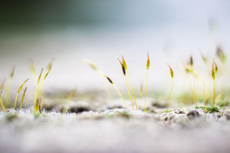 Land Grass