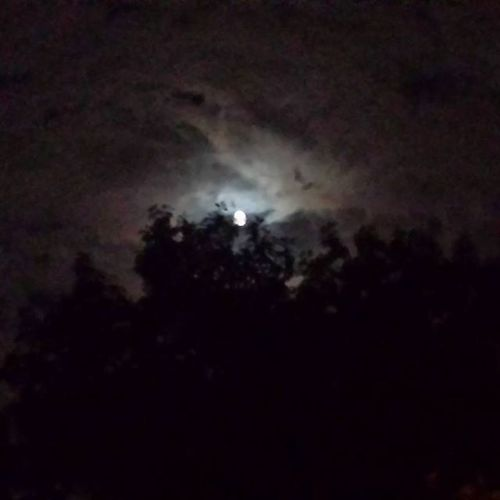 The sky tonight 🌌 Sky Tonight Night To  Dark Moon Moonlight Trees Nature Pic Photo Picture Natural Art Cool Awesome Pretty Beauty Gorgeus Beautiful Good Clouds Cloud Amazing