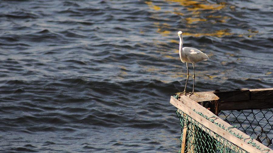 Close-up of bird perching on sea