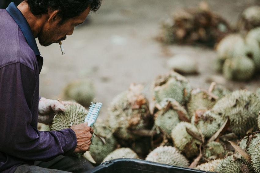 Durian Malaysia Truly Asia Durian Farm Fruit King Malaysia Smoking Worker Tropical Fruit Working