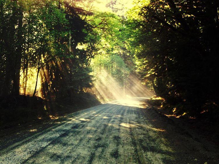 Sun rays Sun Sun Rays Sunshine Sun_collection Sunlight Light And Shadow Light-Play Dirt Road