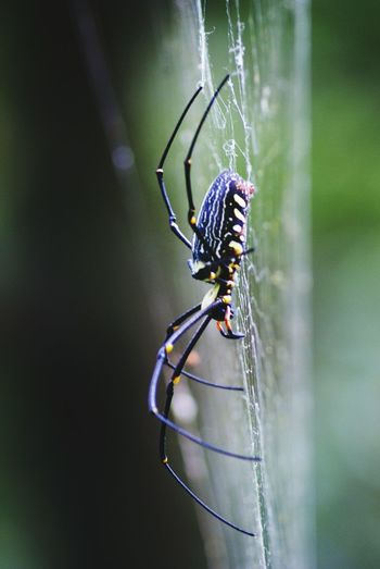 Spider Spiderweb Moment Of Silence Nature Exotic Creatures Beautiful Nature Spider Web Amazing Nature Growing Better