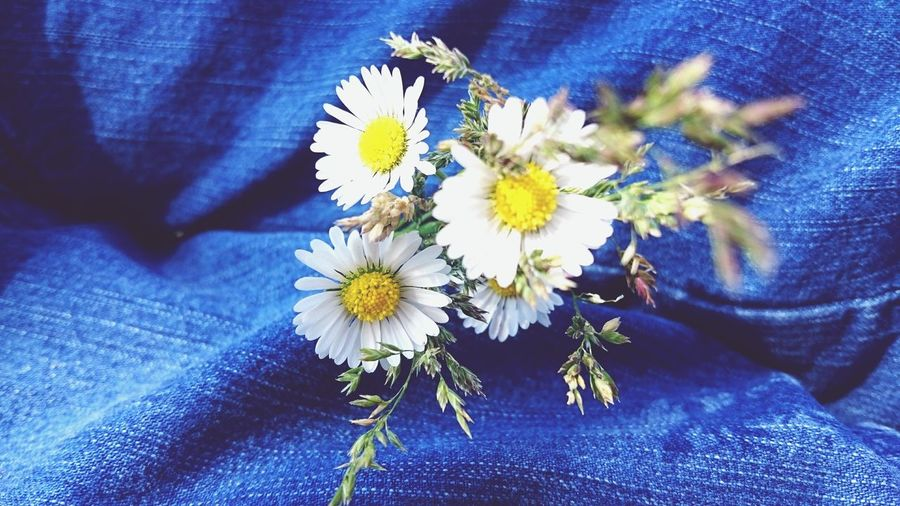 Flowers Flower Plant Plants Plants And Flowers Plants 🌱 Park Daisy Daisies Daisy Flower Relaxing Friends Sun Garden Leaf Leafs Details Jeans Blue Color Blue Relax Green Color Green Wind