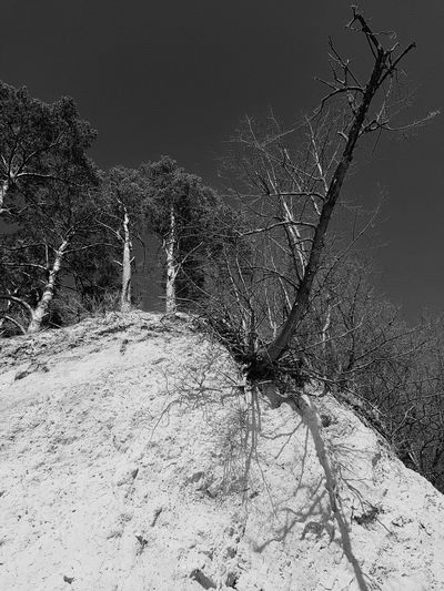 Spring Dead Tree Springtime Up Trees And Sky Sky Clear Sky Cliff Erosion Pine Day Silhouette Trees Close-up Sky Dissolving Shore Sand Textured
