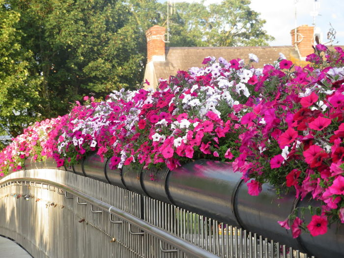 Flowerde Bridge