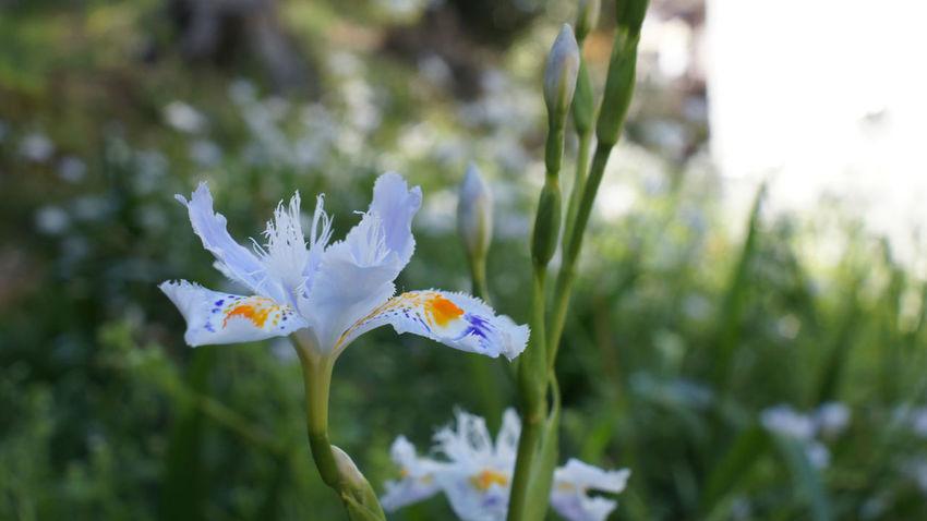Nex5 Flower Flower Head Day Outdoors Takumar 28mm F3.5
