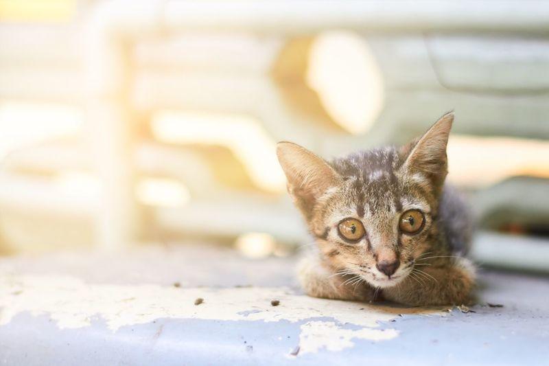 EyeEm Selects Domestic Cat Pets One Animal Feline Mammal Looking At Camera Day Kitten Eye Cute♡ Sweet Hair Daylight