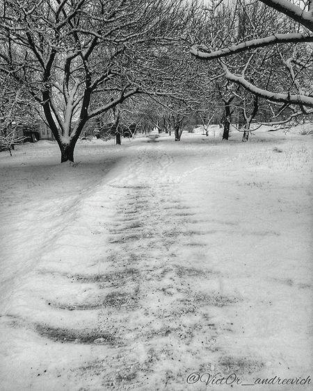 Давно ничего не постил вот вам недавний нуарный снег ! воттакаявоттелега Snow чернобелоефото