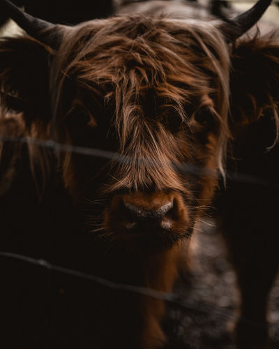 Close-up portrait of domestic animal in animal pen