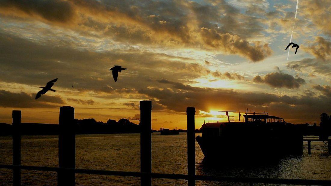 Bird Flying Oil Pump Sunset Silhouette Mid-air Parachute Full Length Sky Cloud - Sky