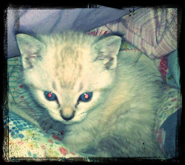CuteNewKitten Aristocats Name=Marie