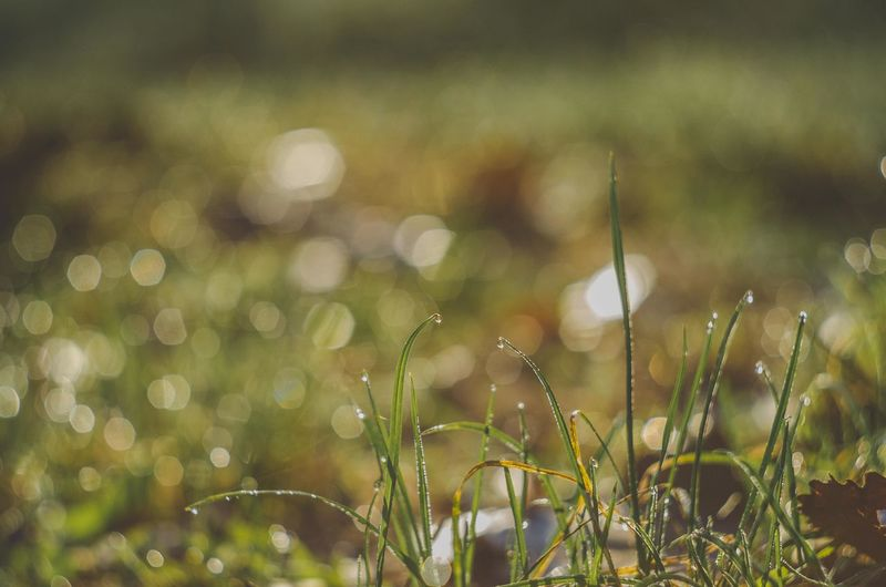 Autumn Drops Frozen Grass Green Soft Beauty In Nature Bokeh Close-up Color Day Defocused Focus Focus On Foreground Forrest Freshness Grass Green Color Growth Leaves Macro Nature No People Outdoors Photo Photography Photography Themes Pic Plant Tranquility Water