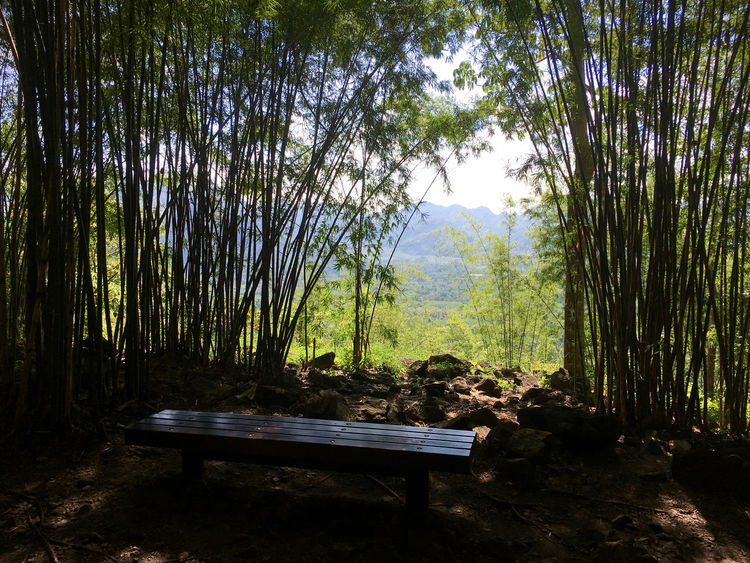 Bench Kanchanaburi Thailand Lushious Landscape Bamboo Beauty In Nature Day Forest Growth Hell Fire Pass Landscape Nature No People Outdoors Outlook, Prospect, Panorama, Vista, Scene, Aspect, Perspective, Spectacle, Sight; Scenery, Landscape Scenics Sunlight Tranquil Scene Tranquility Tree