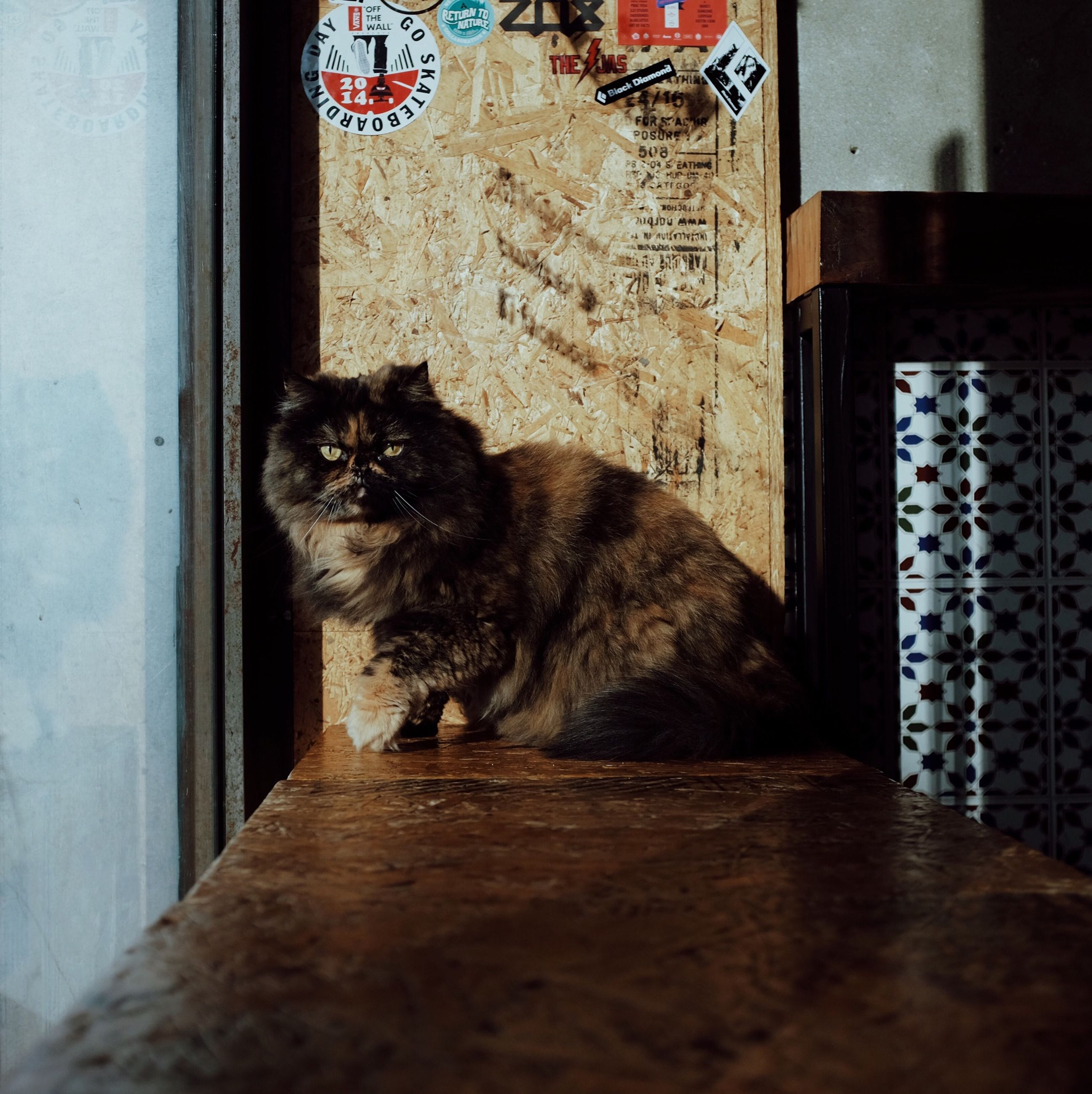 pets, domestic animals, animal themes, one animal, mammal, domestic cat, cat, feline, indoors, relaxation, sitting, built structure, no people, architecture, house, window, full length, wall - building feature, door, portrait