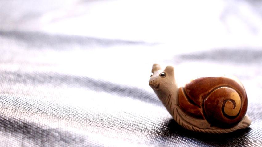 Caracol Animal Themes Bibelô Boneco Caracol Close-up Miniature No People Slug Snail🐌