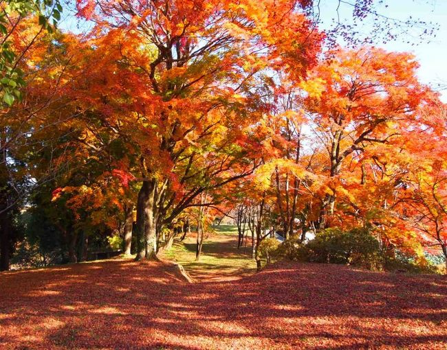 Autumn Beauty In Nature Change Japan Oita Taketa Landscape Leaf Maple Nature No People Orange Color Scenics Tranquil Scene Tranquility Tree