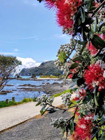 Kuaotunu Bay on the Coromandel in New Zealand yesterday afternoon. Almost Xmas as the pohutukawa are starting to bloom. Outdoors No People Nature EyeEm Selects Tree Beauty In Nature Landscape Sea And Sky Sea