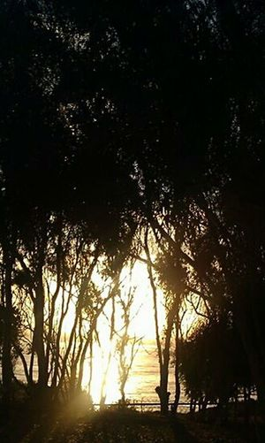 Pathway To Heaven Simplicity At Its Finest Ethereal Tree Silhouette Reflection Time Sunset Mist