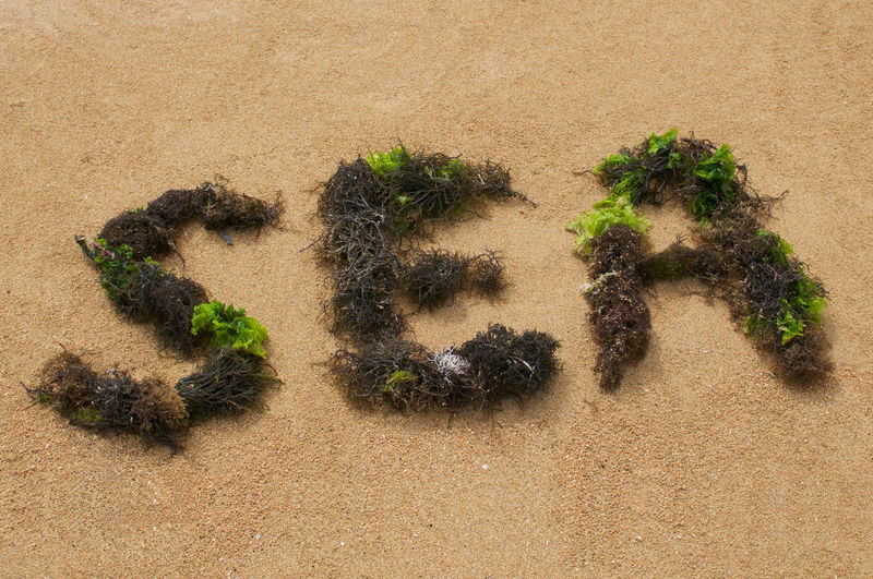 Sea text composed with brown and green seaweed at sanur beach in bali, indonesia