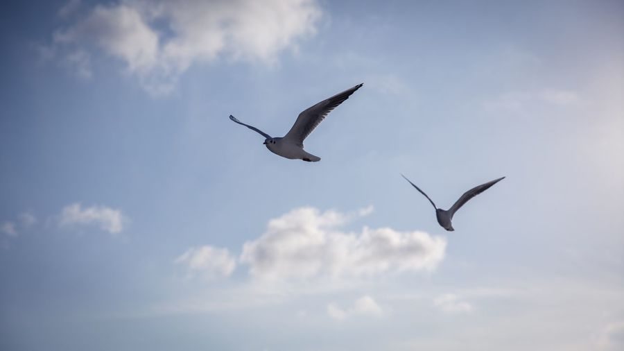 Flying birds Flying Bird Animal Animal Wildlife Cloud - Sky Animal Themes Animals In The Wild Sky Vertebrate Spread Wings Low Angle View Mid-air Nature No People Day Group Of Animals Outdoors Seagull Beauty In Nature