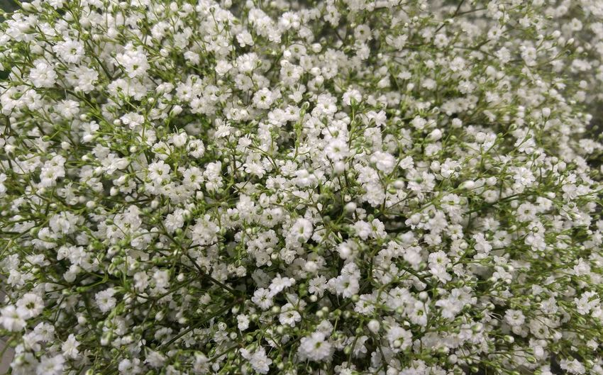 Flower Blossom Growth Nature Fragility Botany White Color Freshness Tree Beauty In Nature Springtime No People Low Angle View Day Spring Backgrounds Outdoors Branch Blooming Close-up