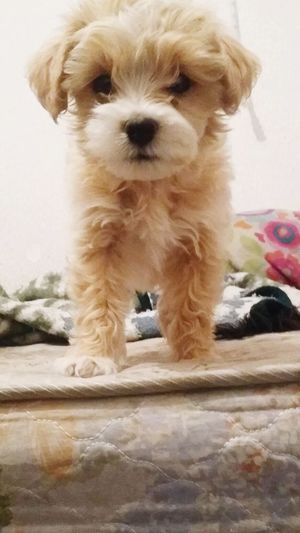 Dog Los Más Cariñosos Losmejoresdelmundo Hermoso Losmasfieles Love
