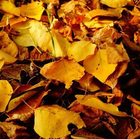 Autumn Autumn Colors Color Leaves Hi! Hello World Beutiful  Nature Природа листья осень краски природы красота Лес