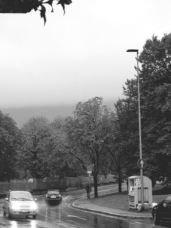 Black And White City Black & White Park Leaf Trees Garden Photography Garden Green Green Color EyeEm Selects No Filter, No Edit, Just Photography Urban Community Italy No Filter Fog Cloud Tree Water Car Sky