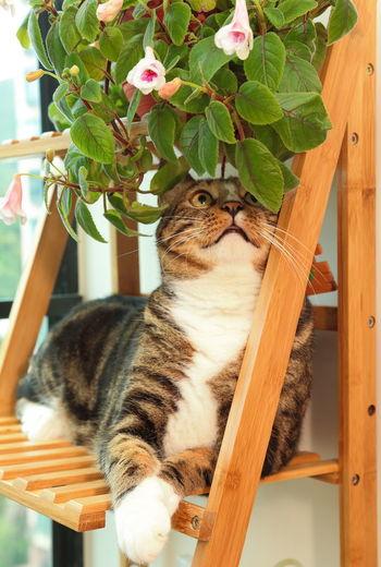 Domestic Pets Plant Cat Close-up Cute Domestic Animals Domestic Cat Naughty Cat Playful Playful Cat Tabby Cat