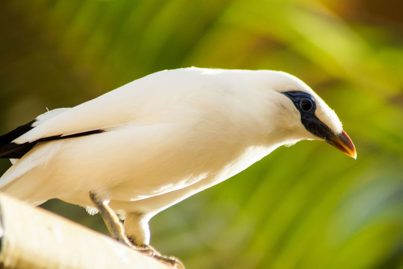 Portrait of a bird Bird Animal Themes Animal Vertebrate One Animal Animal Wildlife Animals In The Wild Close-up Focus On Foreground White Color No People Day Side View Nature Perching Beak Beauty In Nature Outdoors Selective Focus Green Color Profile View