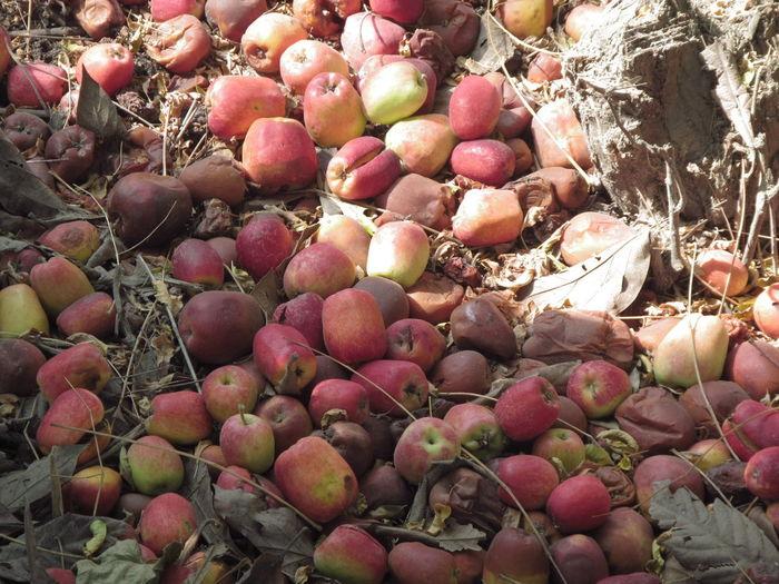 manzanas caidas Paisaje Nature Naturaleza Plantas Way Camino Apples Apple Manzanas Manzana Fruit Market Full Frame Close-up Food And Drink